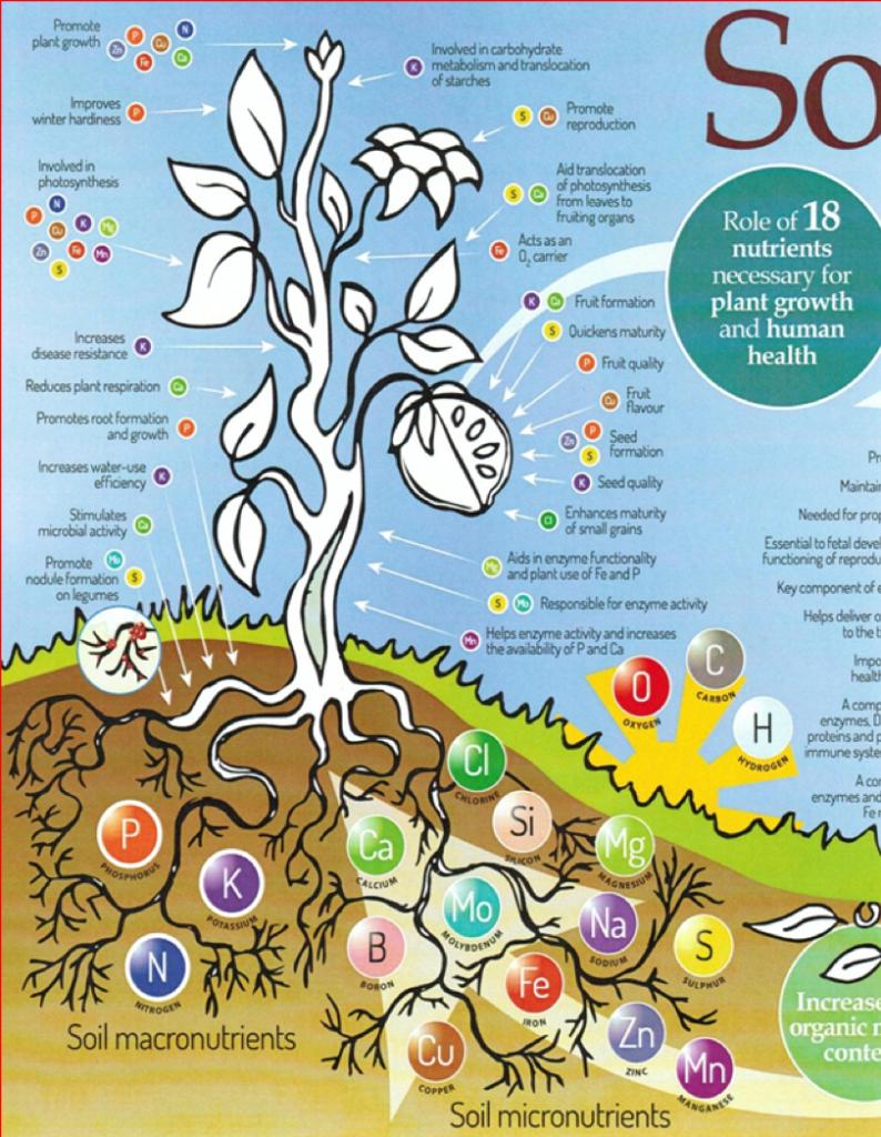 illustrazione piante